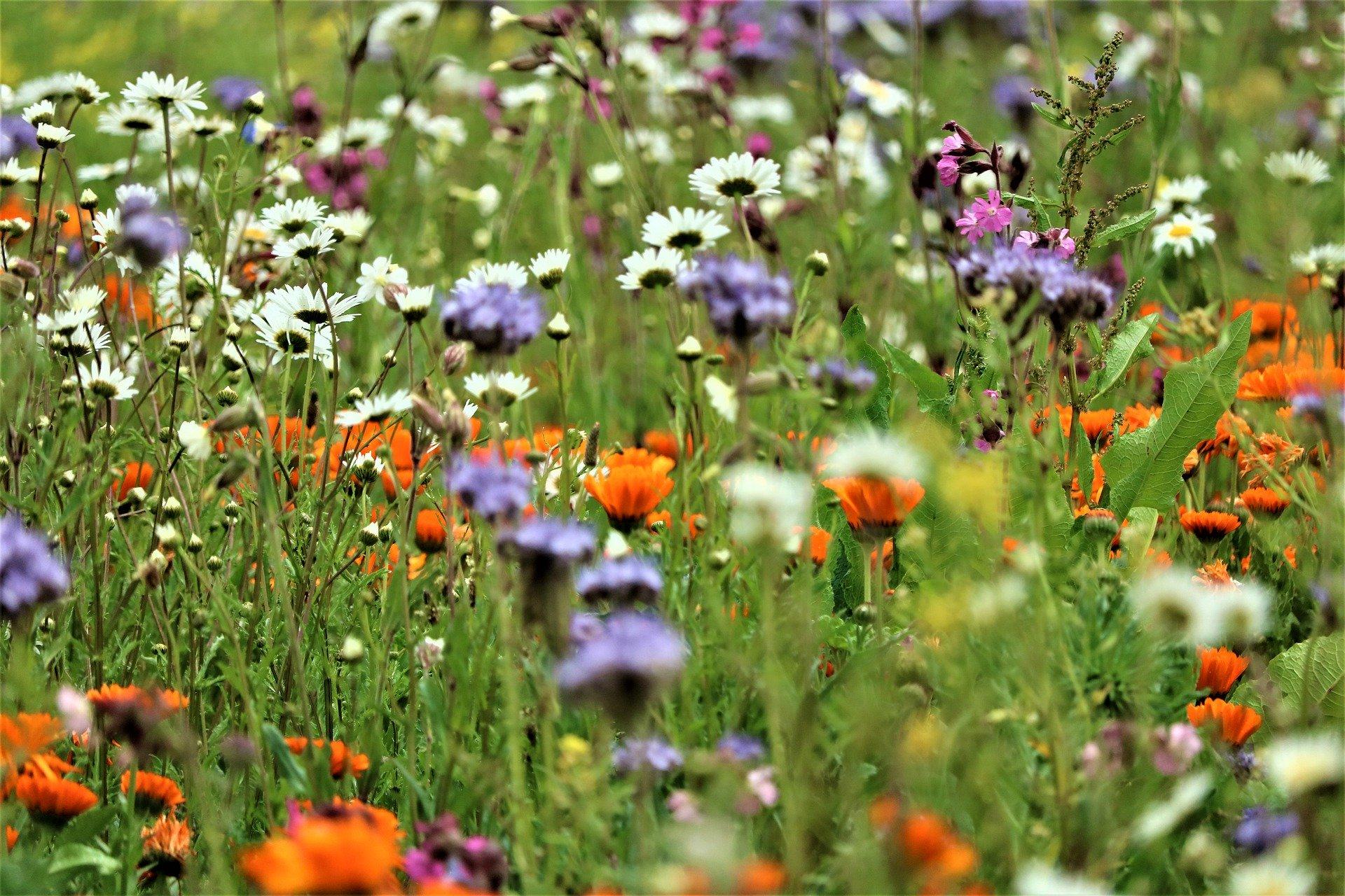 Mehr Blühwiesen