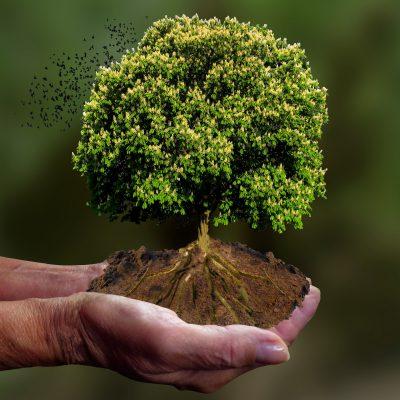 Klima retten