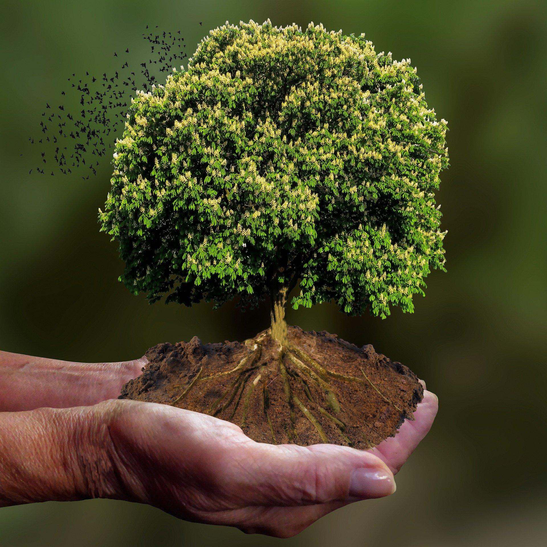 Klima-Vorbehalt! ABGELEHNT!