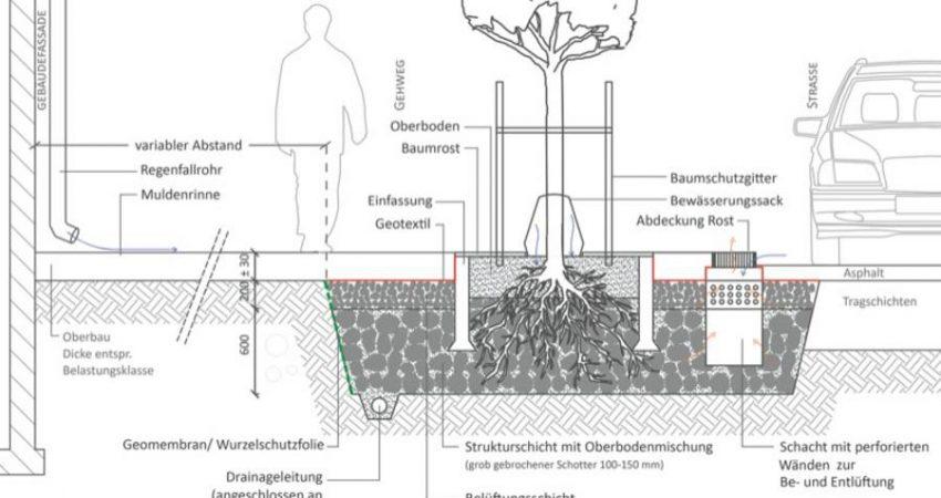Schema Stockholmer Modell. System Stockholm: Einleitung von Straßenabflüssen in die Pflanzgrube gemäß der Stockholm Solution (ohne Maßstab). Grafik: C.Biber, basierend auf Embrén et al. 2009
