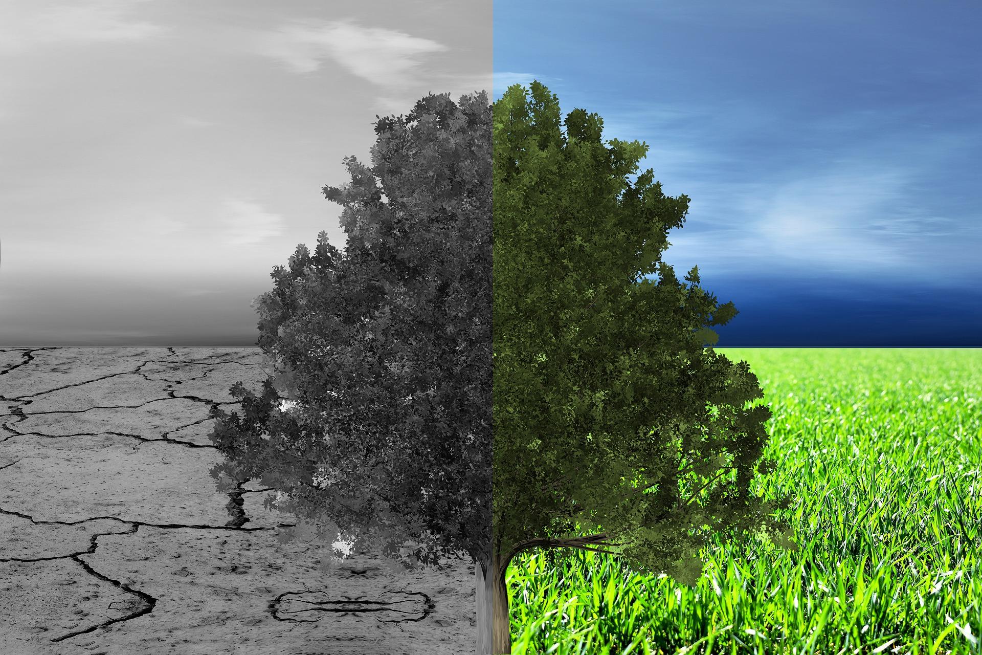 Nun doch erst in 2022: Klimaschutzmanager wird geschoben