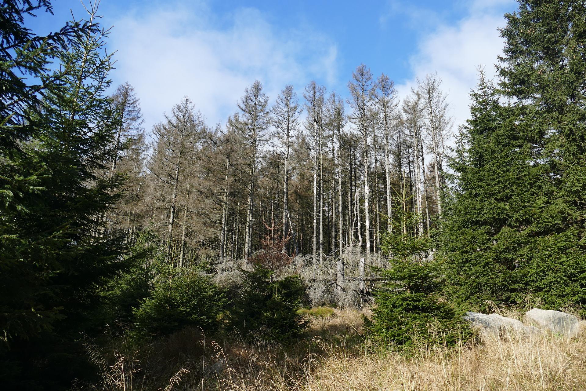 Waldsterben 2021