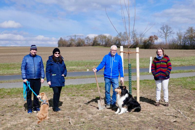 GRÜNE spendeten Obstbäume für Streuobstwiese in Sickershausen